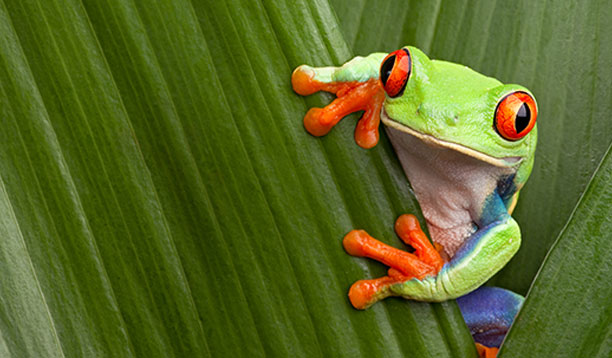 frog-image